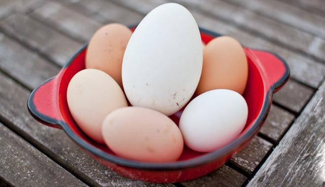 Trứng ngỗng có thể to hơn gấp 4 lần trứng gà nhưng lại kém dinh dưỡng hơn trứng gà rất nhiều. (Ảnh minh hoạ)