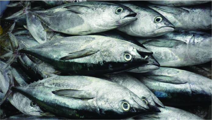 Thực phẩm cần tránh tuyệt đối khi mang thai - cá có hàm lượng thủy ngân cao