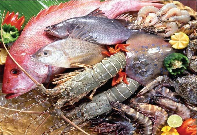 Phụ nữ mang thai có nên ăn nhiều hải sản